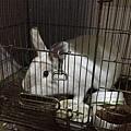 下山回去休息一下,跟小白兔玩一下