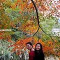 楓樹13.jpg