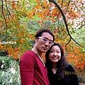 楓樹14.jpg