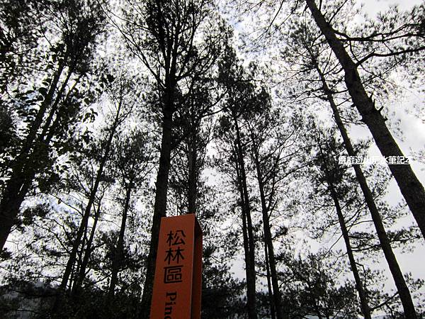 奧萬大吊橋9.jpg