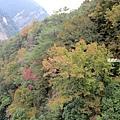 奧萬大吊橋17.jpg