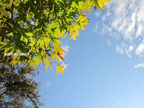 楓葉6.jpg