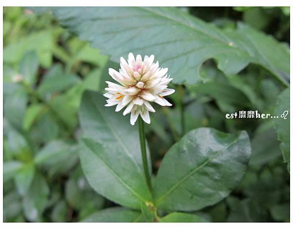 小花2.jpg