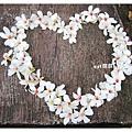 油桐花11.jpg