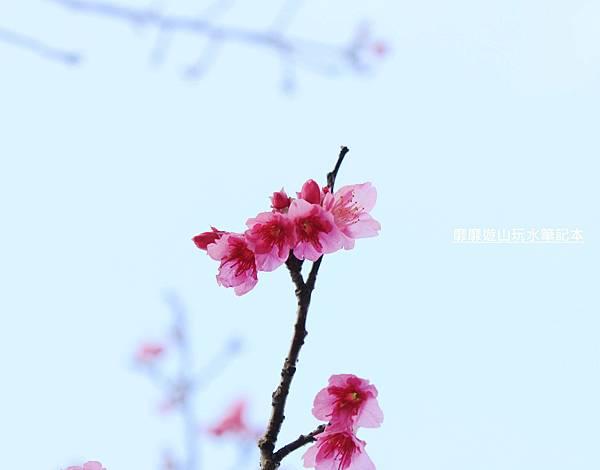 _MG_0396.jpg