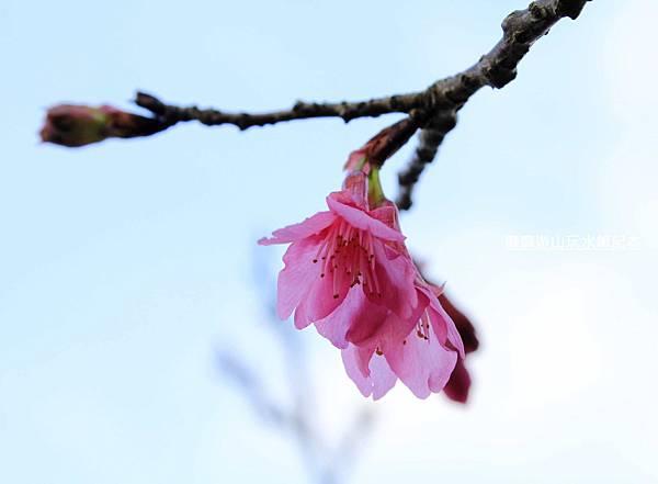 _MG_0378.jpg