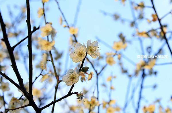 _MG_0434.jpg