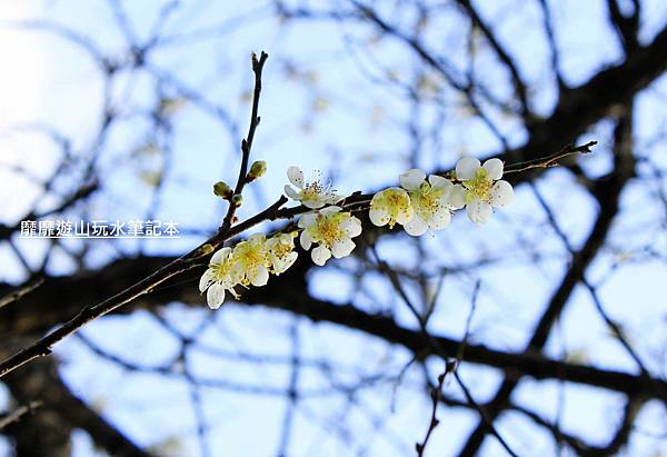 _MG_0218.jpg