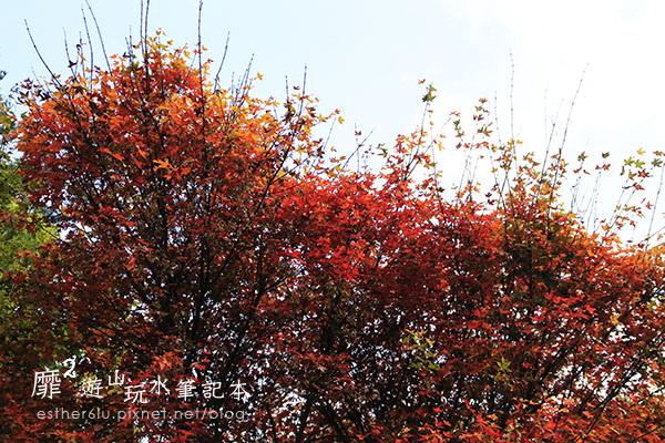 _MG_9613.JPG