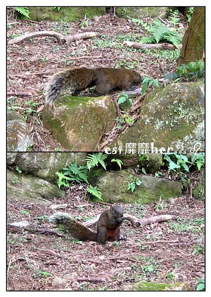 松鼠.jpg