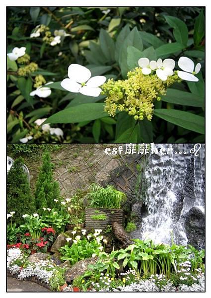 陽明山花季2.jpg