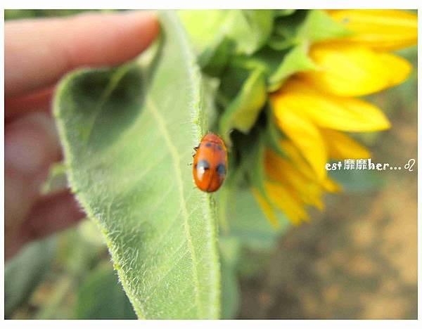小蟲.jpg