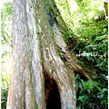 三號巨木2.jpg