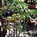 27 室內植物園