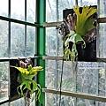29 室內植物園