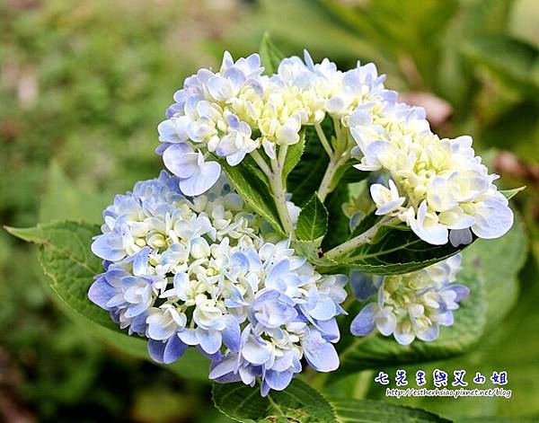 17 某花