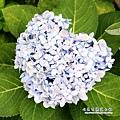 20 某花