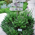 38 王媽媽香草園
