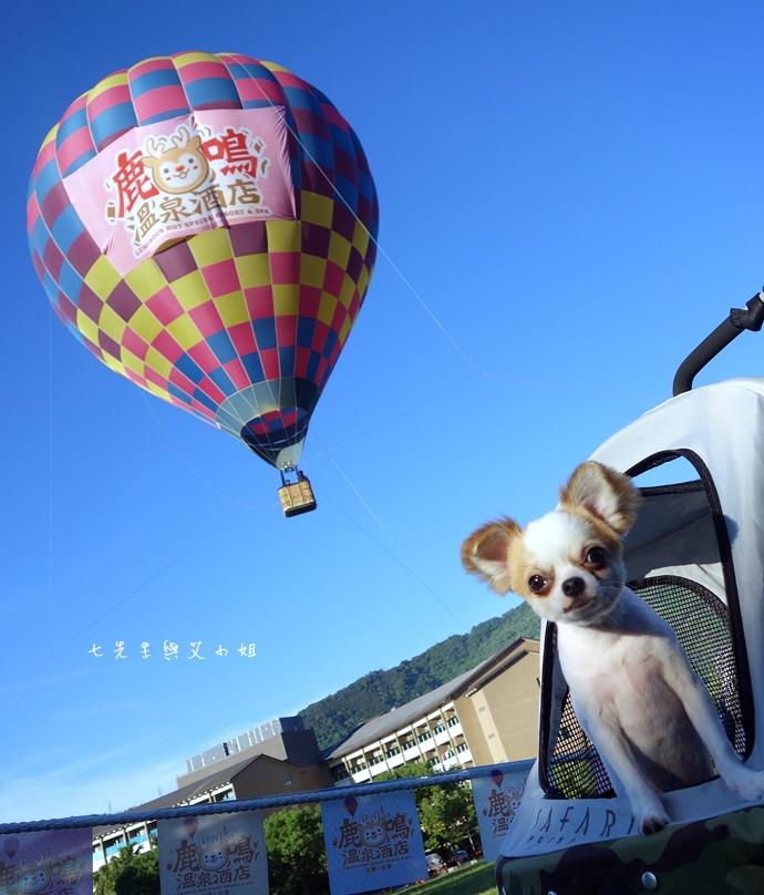 43 台東鹿鳴溫泉酒店熱氣球享鹿飛飛
