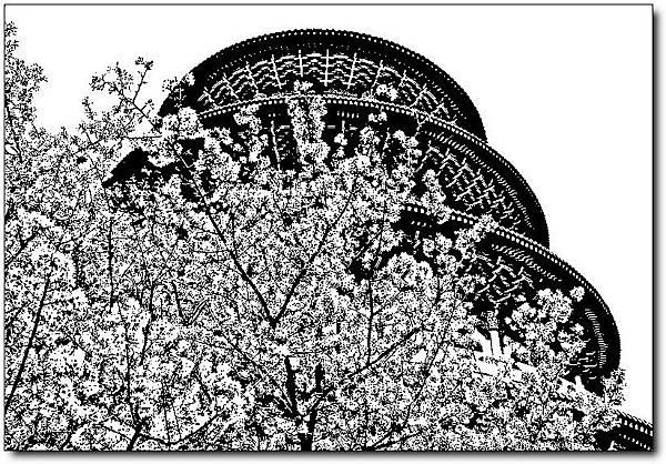 台北天元宮櫻花祭