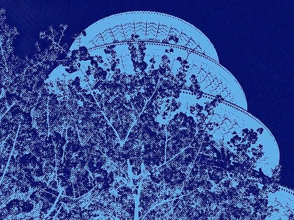 淡水天元宮櫻花