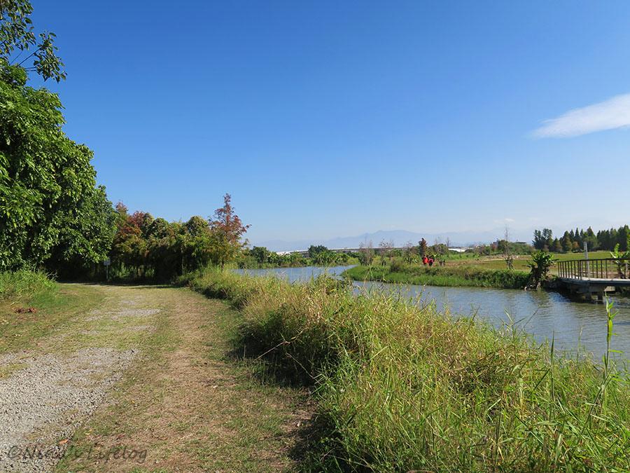 台南六甲|落羽松森林、菁埔埤