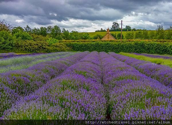 薰衣草園 Snowshill Lavender Field