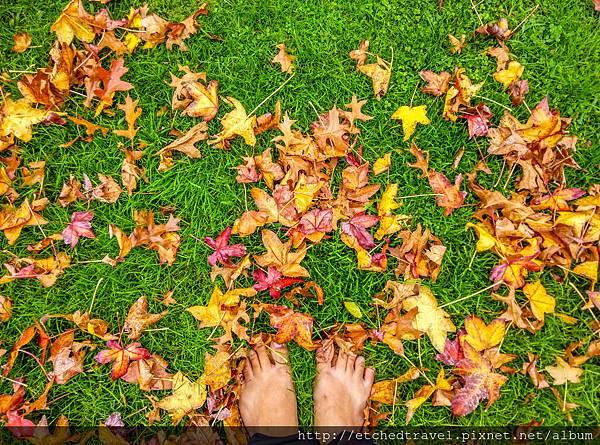 落葉 Leaves