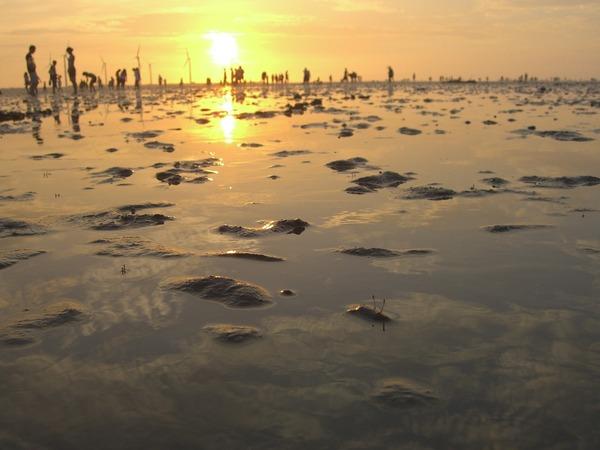 夕陽西下,招潮蟹探頭向前望