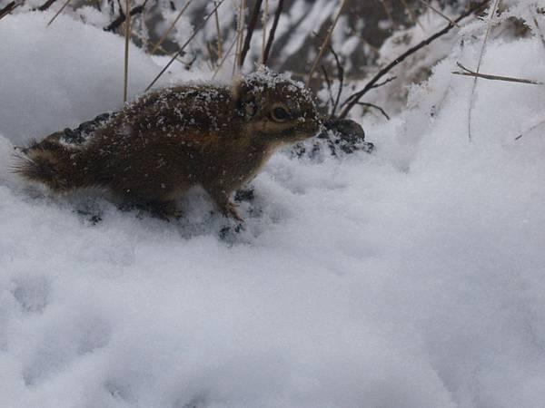 娥媚山的松鼠