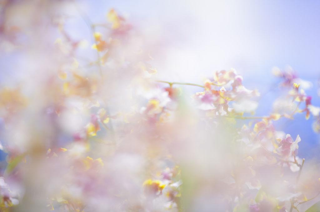 影像創作【作品】風景攝影 【攝影老師】Leonhung