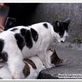 小惡魔老師的婚紗攝影-侯硐。貓