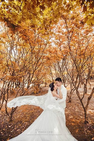 陽明山楓葉