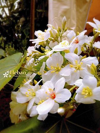 2013-04-04 荷苞x桐花x拉拉