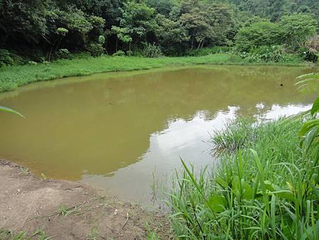 翠湖1.JPG