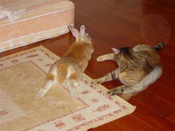 不把貓放眼裡的午後