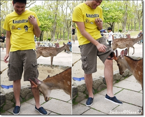 小皮餵鹿2
