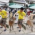 小皮餵鹿3