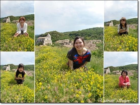 小黃花.jpg