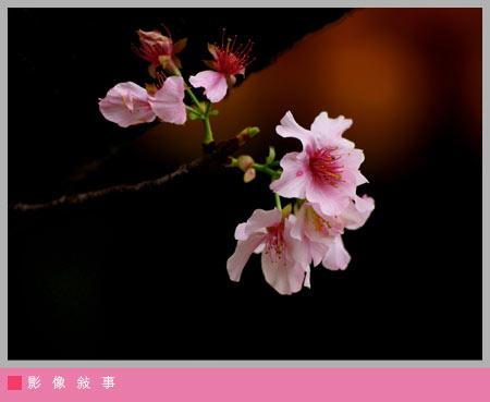 櫻花雨08.jpg