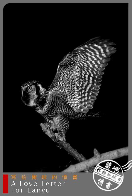 蘭嶼情書-夜間探險.jpg
