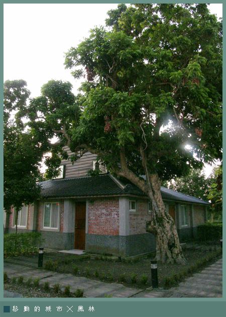 芳草古樹2-6.jpg