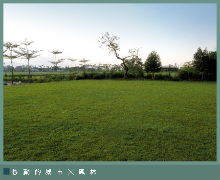 芳草古樹2-10.jpg