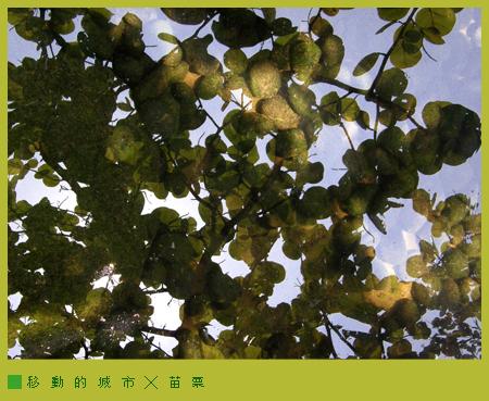 華陶窯20.jpg