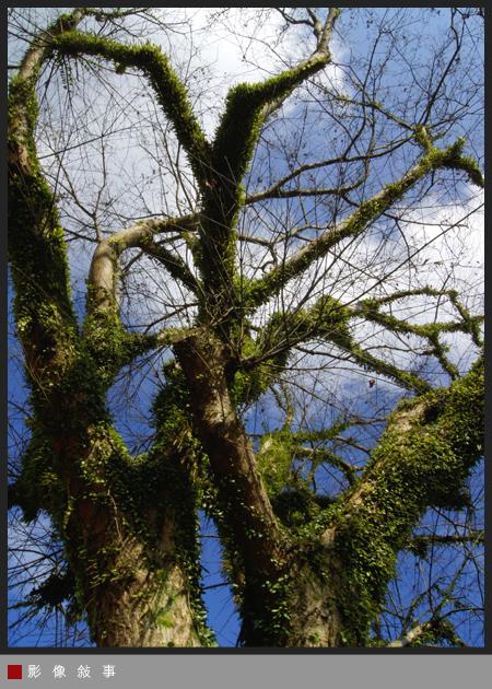 樹01.jpg