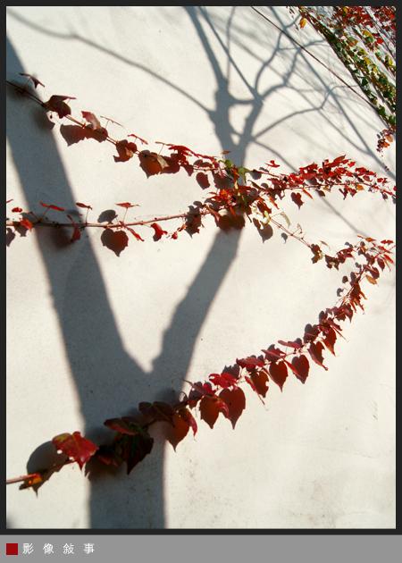 樹02.jpg
