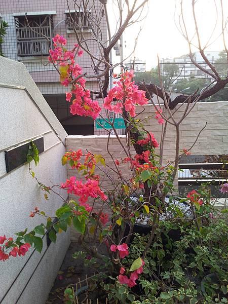 20131125_063844.jpg
