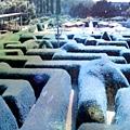 1206 Ashcombe Maze 1.jpg