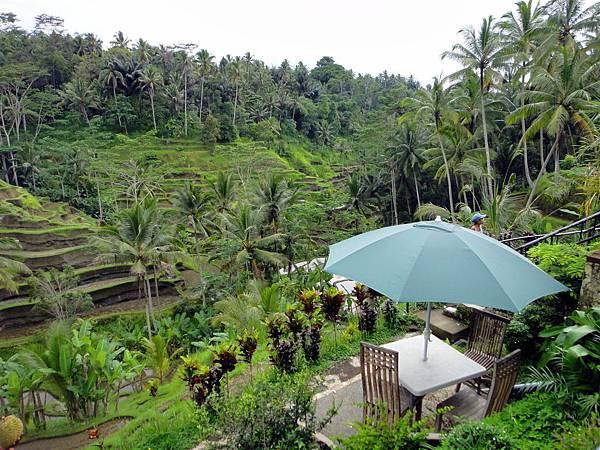 Bali- Tegallalang1