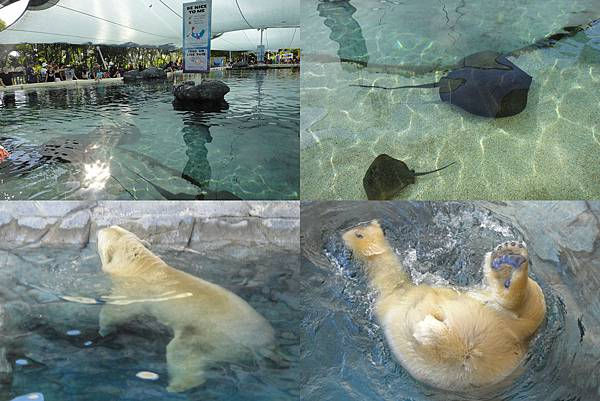 sea world06
